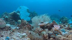 Korallenrote Bleiche Stockbild