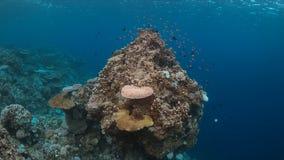 Korallenrote Bleiche Stockfotos