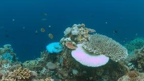Korallenrote Bleiche Stockfoto
