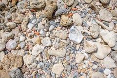 Korallenrote Chips Stockbilder