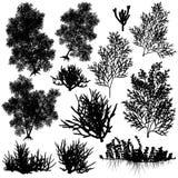 Korallenrote Elemente Lizenzfreies Stockbild