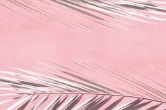 Korallenrote Farbe des Zusammenfassungshintergrundes mit grauen Niederlassungen von Palmen lizenzfreies stockfoto
