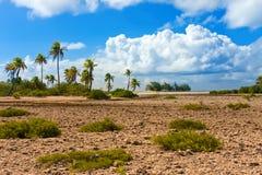 Korallenrote Felder und Palmen lizenzfreie stockbilder