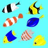 Korallenrote Fische Lizenzfreie Stockbilder