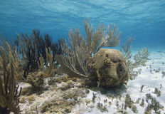 Korallenrote Gärten Stockfotografie