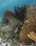 Korallenrote Gärten Lizenzfreie Stockbilder