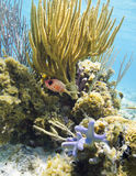 Korallenrote Gärten Lizenzfreies Stockbild