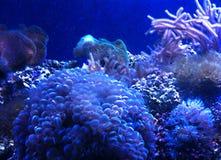Korallenrote Gruppe stockbild