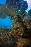 Korallenrote Kolonie Lizenzfreies Stockbild