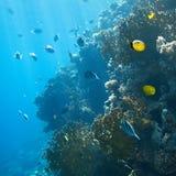 Korallenrote Kolonie Lizenzfreies Stockfoto