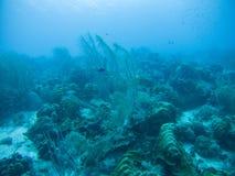 Korallenrote Lebenunterwassertauchsafari karibisches Meer Stockfotos
