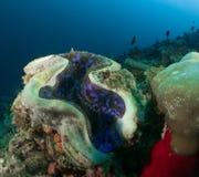 Korallenrote Malediven Stockbild
