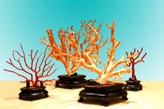 Korallenrote Niederlassungen stockbild