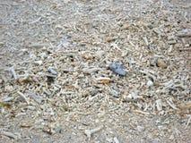 Korallenrote Stücke Lizenzfreie Stockfotografie