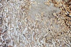 Korallenrote Steine Stockbild