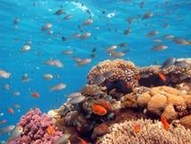 Korallenrote Szene Stockfotografie