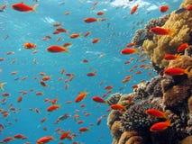 Korallenrote Szene Stockfoto