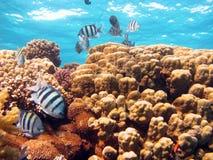 Korallenrote Szene Stockbild