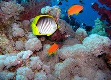 Korallenrote Szene lizenzfreies stockbild