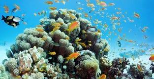 Korallenrote Szene - Panorama Lizenzfreie Stockfotografie