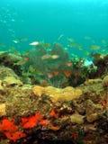 Korallenrote und Marinelebensdauer Lizenzfreie Stockfotografie