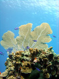 Korallenroter Berggipfel lizenzfreie stockfotos
