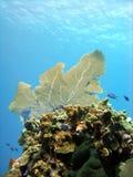 Korallenroter Berggipfel Lizenzfreies Stockfoto
