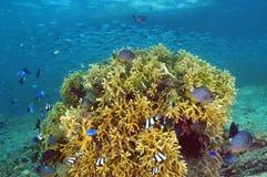 Korallenroter Block mit Fischen Lizenzfreies Stockfoto
