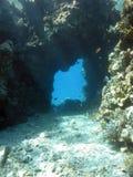 Korallenroter Flur Stockbild
