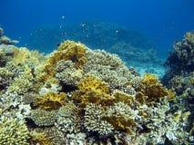 Korallenroter Garten Stockfoto