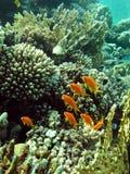 Korallenroter Garten Stockbilder