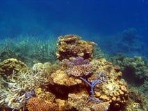 Korallenroter Garten auf dem Wallriff Lizenzfreie Stockfotos
