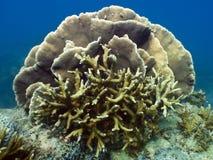 Korallenroter Garten Vista Stockfotografie