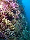 Korallenroter Garten Vista Stockbilder