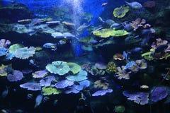 Korallenroter Meeresgrund Stockbild