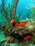 Korallenroter Schwamm stockbilder
