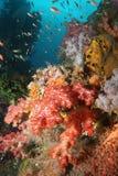 Korallenrotes Leben tauchender Indonesien-Seeozean Lizenzfreies Stockbild