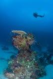 Korallenrotes Leben tauchendes Papua-Neu-Guinea Pazifik Ocea Stockfotografie