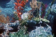 Korallenrotes Meer Stockfotografie