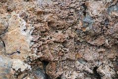 Korallenrotes Sediment versteinert lizenzfreie stockfotos