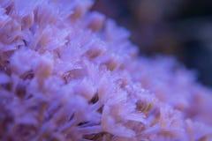 Koraller är mycket nära Arkivbild