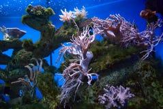 Koraller Arkivfoton