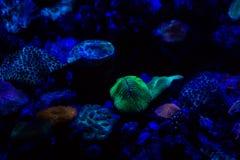 Koraller Arkivbilder