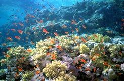 koraller Royaltyfri Foto