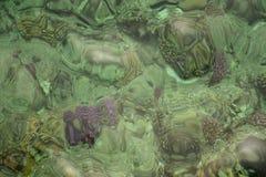 Koraller av kusten av Röda havet Arkivbild