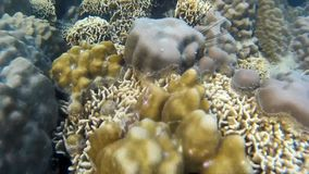 Koraller av Thailand stock video