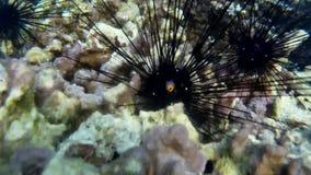 Koraller av Thailand lager videofilmer