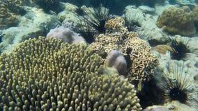Koraller av Thailand arkivfilmer