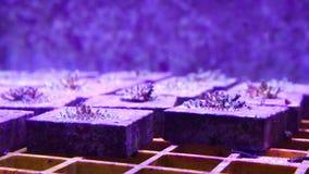 Koraller för forskning arkivfilmer