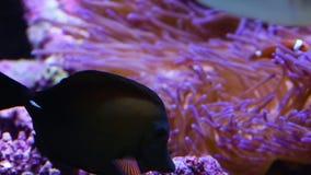 Koraller för forskning stock video
